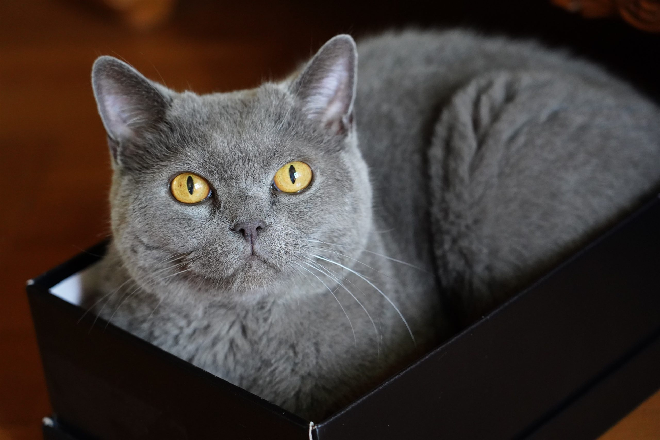 Portretfotografie kat
